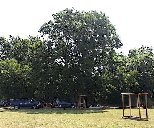 fg_tree
